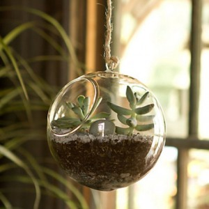contemporary-indoor-pots-and-planters